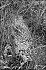 Bild StS_1987_vC_62_15_a-c_210x140.tif