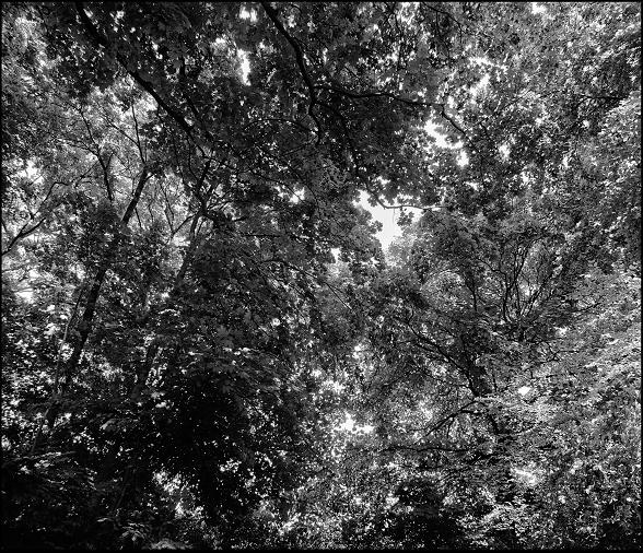 Bild StS_2008-0262_10_a-c_155x180.tif